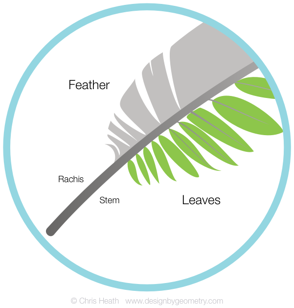 Feather and Fern Leaf Comparison
